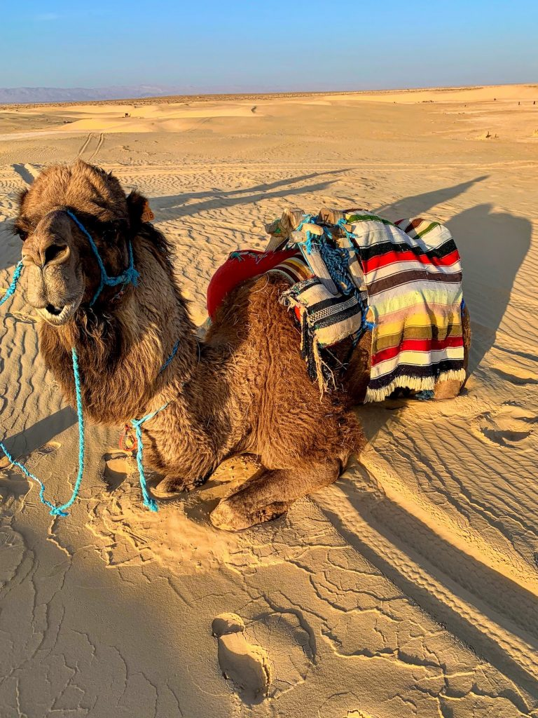 Travel Tips for Tunisia: 10 Essential Tips for Your First Visit