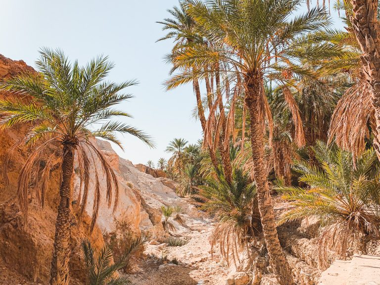 A Guide: What to do in Tozeur Tunisia