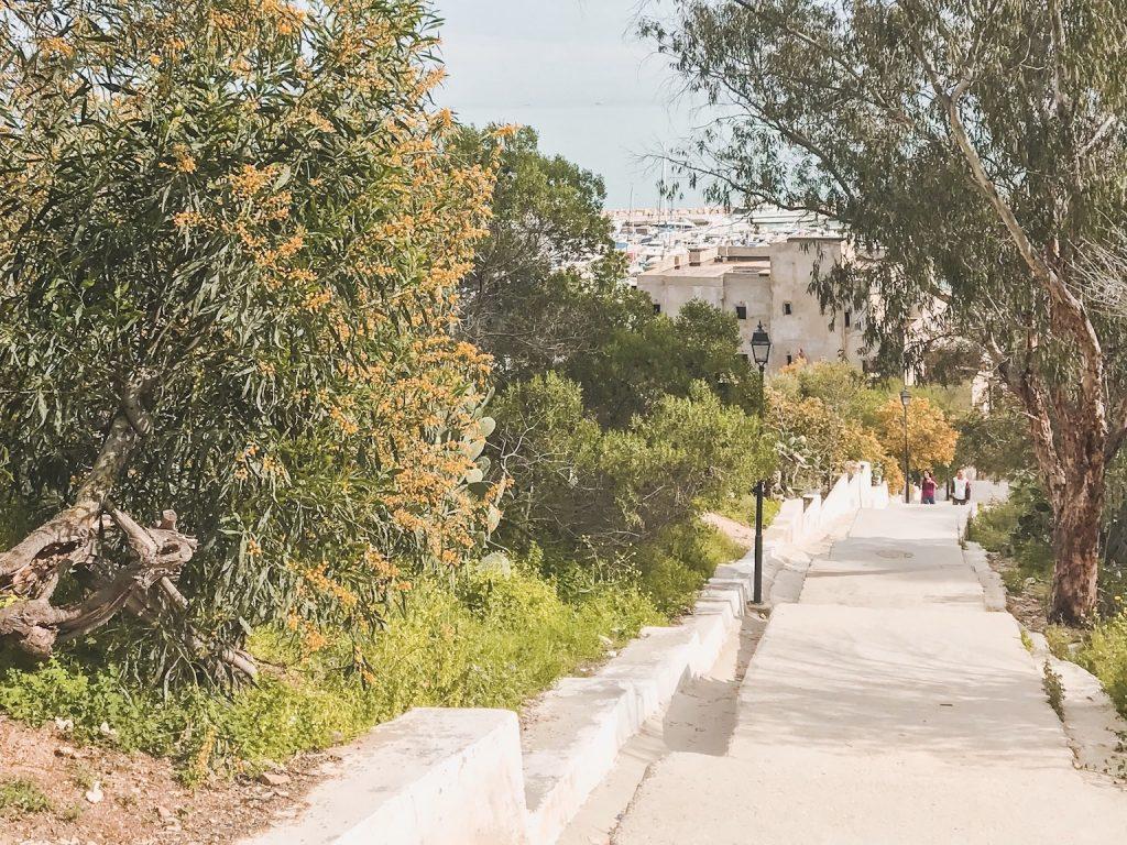Sidi Bou Said Stairs to the Marina