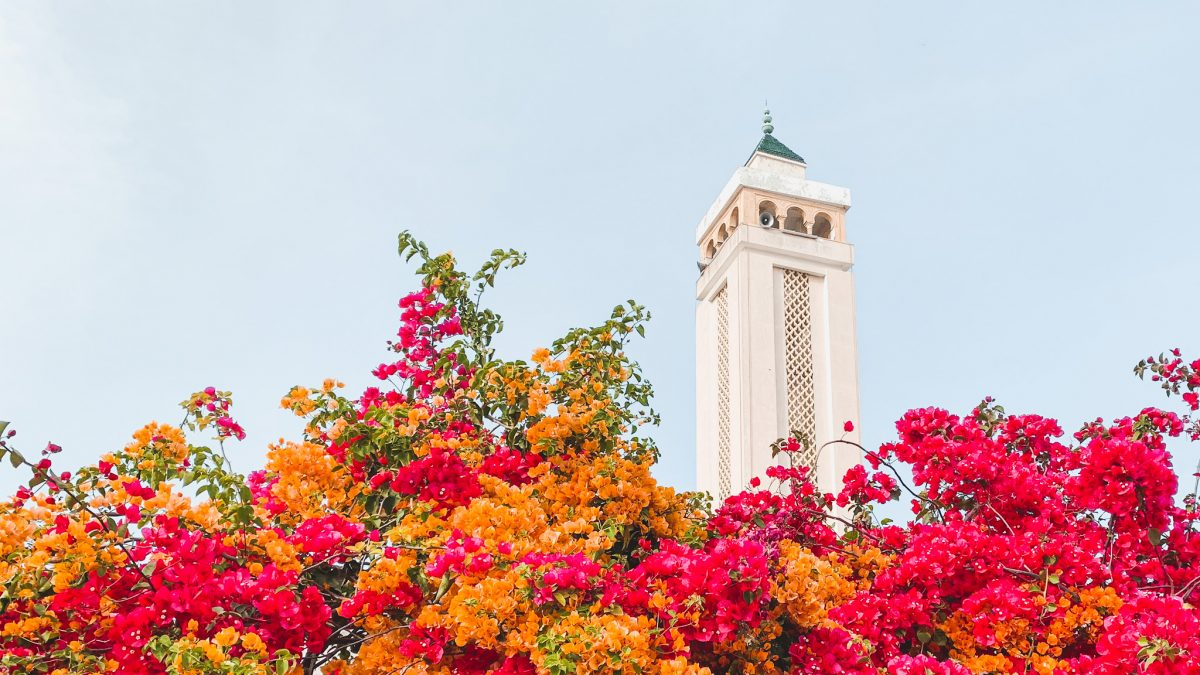 Why you should Visit Tunisia For Your Next Holiday
